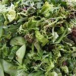 Mixed Green Leaf Salad